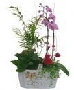 Доставка цветов.ру: композиция Счастье цветочницы!